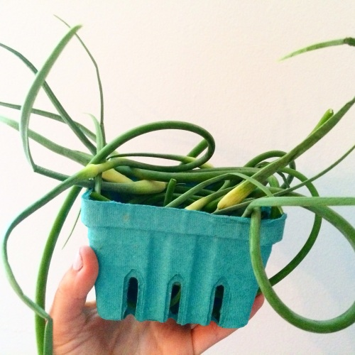 Farmer's Market garlic scapes | Peace, Love, and Food